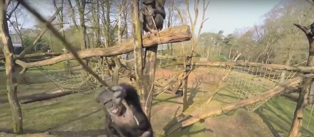 Photo of VIDEO DNE: Zvířata vs drony, kdo vítězí?