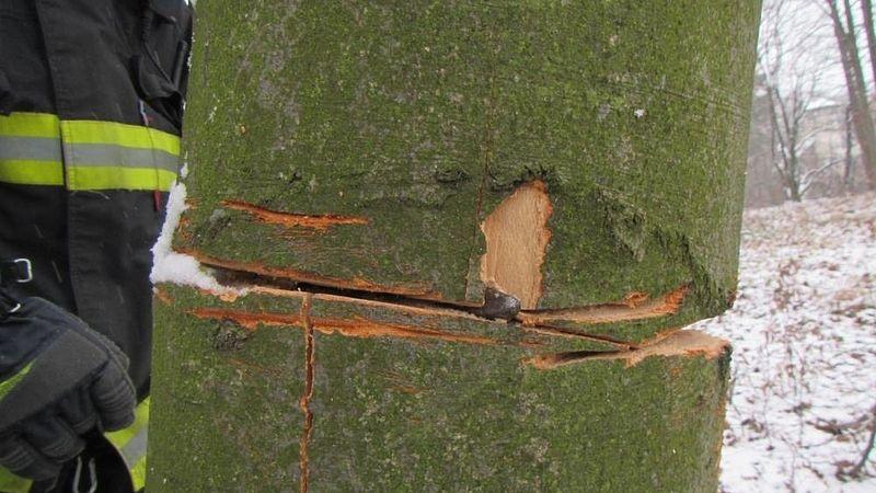 Photo of Uvízl mu dron na stromě, tak se ho snažil pokácet